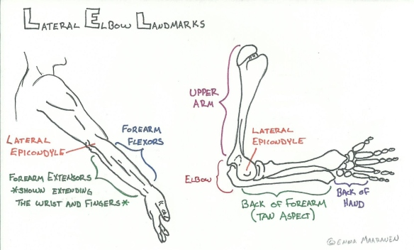 Lateral Elbow Landmarks